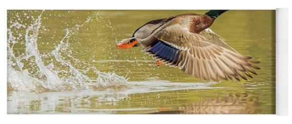 Mallard Duck 1952-112017-2cr Yoga Mat