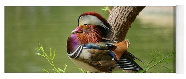 Mandarin Duck On Tree Yoga Mat