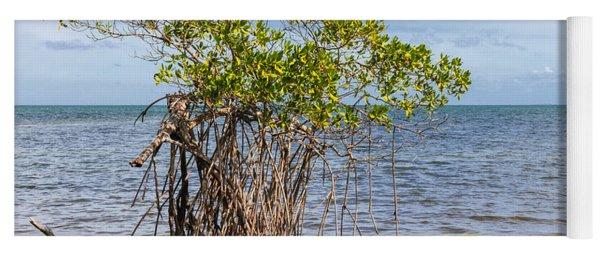 Mangrove At Florida Keys Yoga Mat