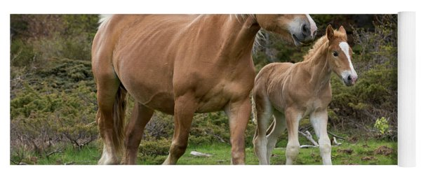 Mare And Foal In France Yoga Mat