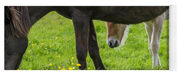 Mare And New Born Foal Grazing, Iceland Yoga Mat