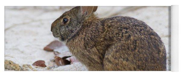 Marsh Rabbit On Dune Yoga Mat