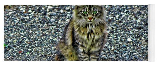 Mattie The Main Coon Cat Yoga Mat