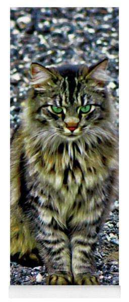 Mattie The Main Coon Cat Yoga Mat