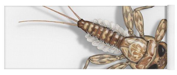 Mayfly Larva Nymph Rithorgena Ecdyonurus Venosus - Moscas De May Yoga Mat