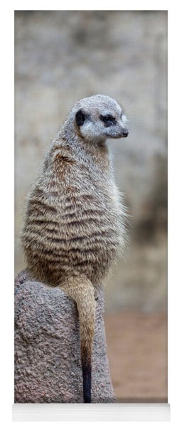Meerkat Sitting And Looking Right Yoga Mat