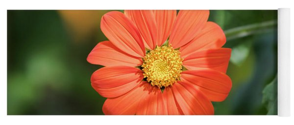 Mexican Sunflower 2017-1 Yoga Mat