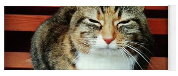 Mindful Cat Pose Yoga Mat