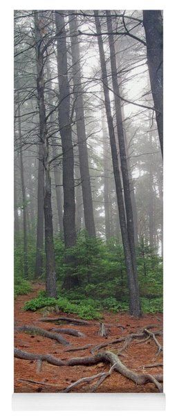 Misty Morning In An Algonquin Forest Yoga Mat