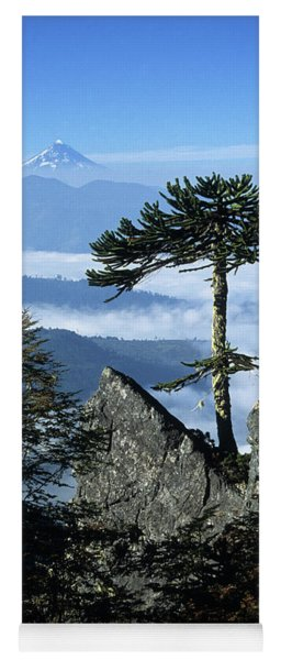 Monkey Puzzle Trees In Huerquehue National Park Yoga Mat