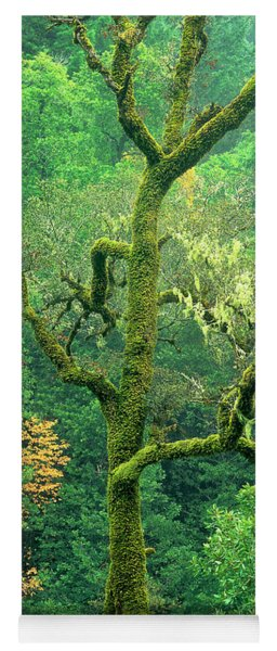 Moss Draped Oak Quercus Spp Central California Yoga Mat