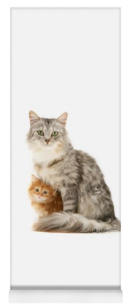 Mother Cat And Ginger Kitten Yoga Mat