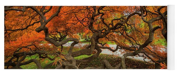 Mount Auburn Cemetery Beautiful Japanese Maple Tree Orange Autumn Colors Branches Yoga Mat