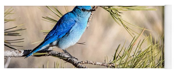 Mountain Bluebird In A Pine Yoga Mat