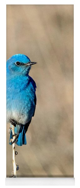 Mountain Bluebird On A Stem. Yoga Mat