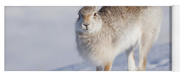 Mountain Hare In The Snow - Lepus Timidus  #2 Yoga Mat