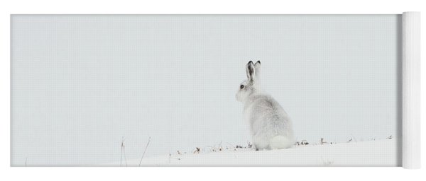 Mountain Hare Sat In Snow Yoga Mat