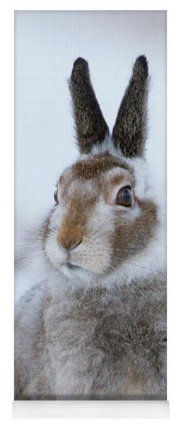 Mountain Hare - Scotland Yoga Mat