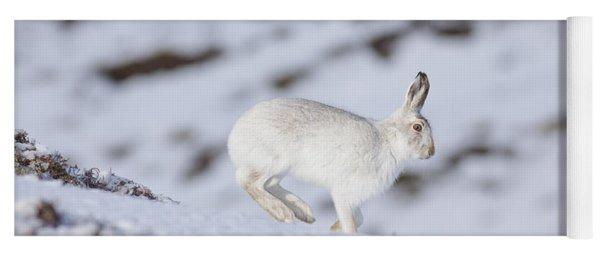 Mountain Hare - Scottish Highlands  #12 Yoga Mat