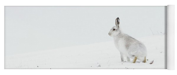 Mountain Hare Side On Yoga Mat