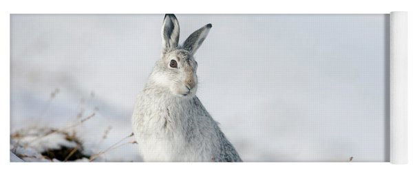 Mountain Hare Sitting In Snow Yoga Mat