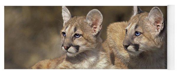 Mountain Lion Cubs On Rock Outcrop Yoga Mat
