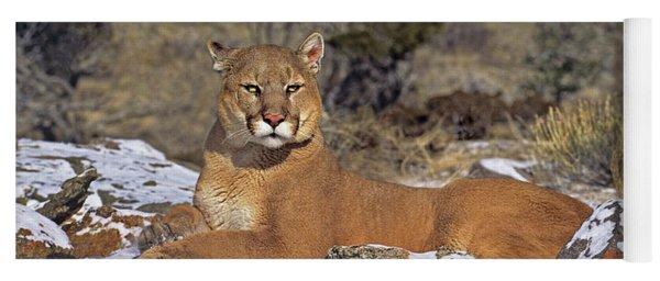 Mountain Lion Felis Concolor Captive Yoga Mat