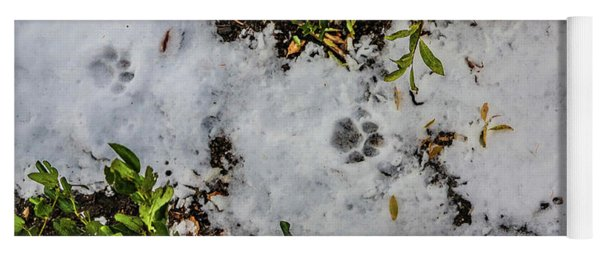 Mountain Lion Tracks In Snow Yoga Mat