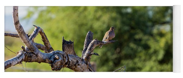 Mourning Dove In Old Tree Yoga Mat