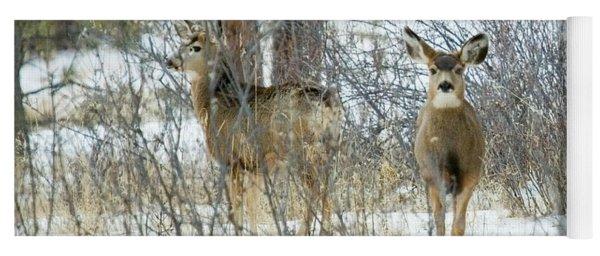 Mule Deer Does In Snow Yoga Mat