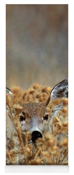 Mule Deer Odocoileus Hemionus Wild California Yoga Mat