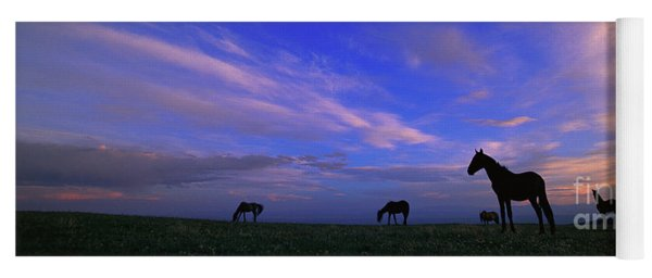 Yoga Mat featuring the photograph Mustangs And Evening Sky by Yva Momatiuk John Eastcott