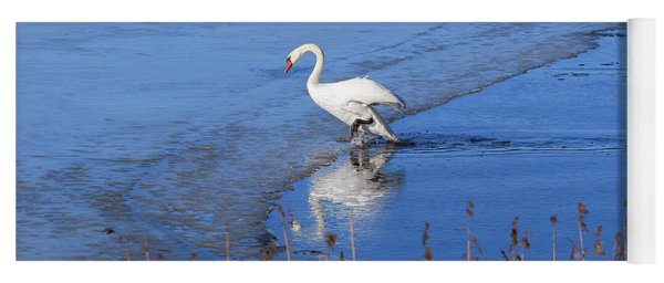 Mute Swan Climbs On The Ice Yoga Mat