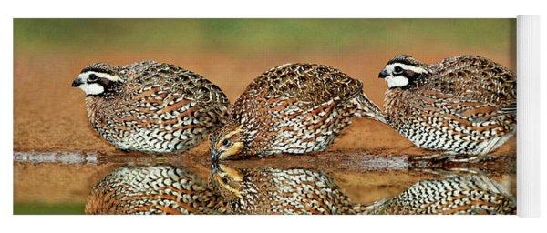 Northern Bobwhites Birds Colinus Virginianus Wild Hida Yoga Mat