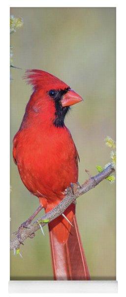 Northern Cardinal Cfh175894 Yoga Mat
