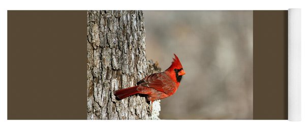 Northern Cardinal On Tree Yoga Mat