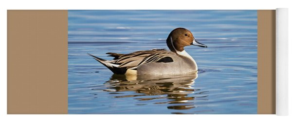 Northern Pintail Duck Yoga Mat