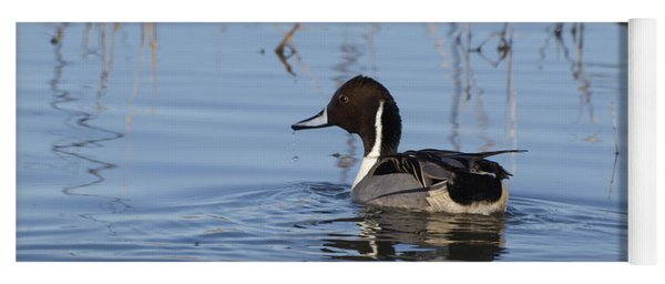 Yoga Mat featuring the photograph Northern Pintail Glides Across Water by Eyes4Nature