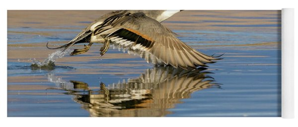 Northern Pintail With Reflection Yoga Mat