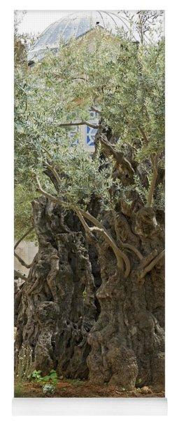 Old Olive Trees Gethsemane Jerusalem Yoga Mat