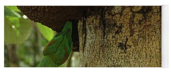 Orange -chinned Parakeet  On A Termite Mound Yoga Mat
