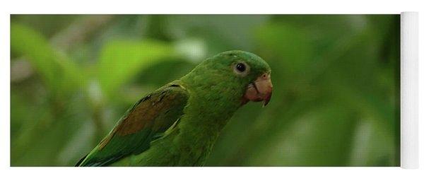 Orange-chinned Parakeet  Yoga Mat