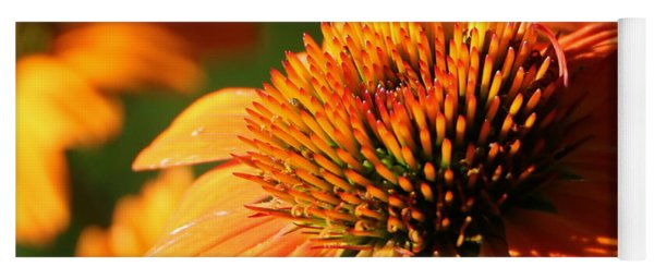 Orange Coneflower At First Light Yoga Mat