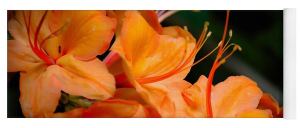 Orange Rhododendron Crush Yoga Mat