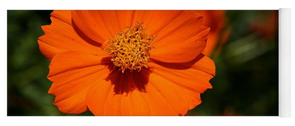 Orange Sulfur Cosmos Flower Yoga Mat