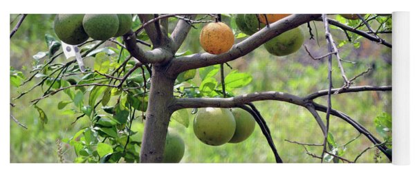 Orange Tree Yoga Mat
