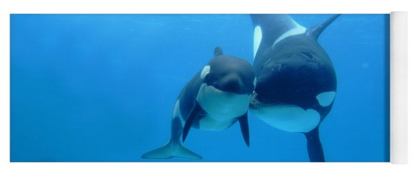 Orca Orcinus Orca Mother And Newborn Yoga Mat