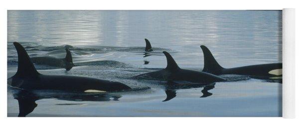 Orca Pod Johnstone Strait Canada Yoga Mat