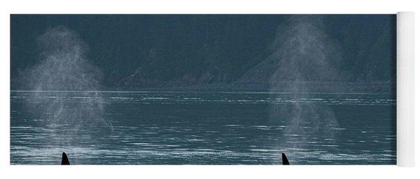 Orcas In Resurrection Bay Yoga Mat