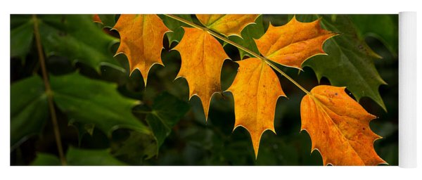 Yoga Mat featuring the photograph Oregon Grape Autumn by Mary Jo Allen